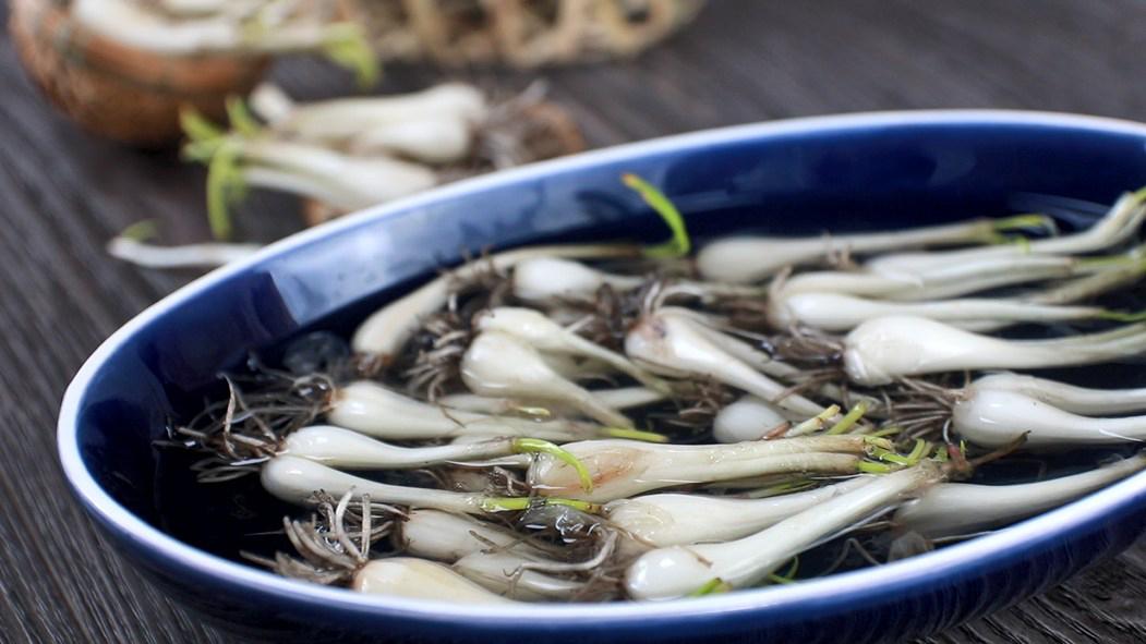 Củ kiệu mua về cho vào nước ngâm 15 phút sau đó dùng dao làm sạch lớp vỏ úa bên ngoài, cắt rễ, rửa sạch đất rồi để ráo nước. Tiếp theo, cho củ kiệu vào 1 chiếc thau sạch, đổ muối và cho nước ngập củ kiệu để ngâm trong nửa ngày. Ngâm kiệu với muối để cho kiệu bớt vị cay hăng, khi ăn sẽ ngọt hơn.